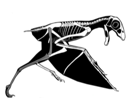 Ambopteryx / © Gunnar Bivens. Creative Commons 3.0 Unported (CC BY 3.0)