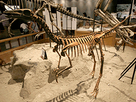 Skelett des Archaeornithomimus / © Kabacchi (Flickr.com). Creative Commons 2.0 Generic (CC BY 2.0)