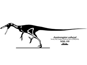 Austroraptor Fossilfunde / © Jaime Headden (deviantart.com). Creative Commons 3.0 Unported (CC BY-NC-ND 3.0)