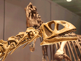 Bellusaurus / © Kabacchi (Flickr.com). Creative Commons 2.0 Generic (CC BY 2.0)