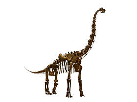 Skelett des Brachiosaurus / © Mark Ryan (Flickr.com). Creative Commons 2.0 Generic (CC BY-NC-ND 2.0)