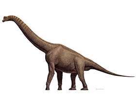 Brachiosaurus  © Raul Martin. Used with kindly permission.