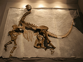 Skelett des Camarasaurus / © Kabacchi. Creative Commons 2.0 Generic (CC BY 2.0)