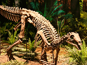 Skelett des Camptosaurus / © Via Tsuji (Flickr.com). Creative Commons 2.0 Generic (CC BY-NC-ND 2.0)