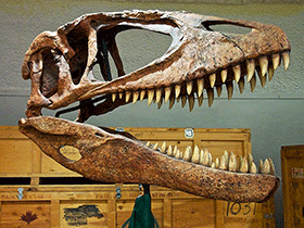 Schädel des Carcharodontosaurus / © Sam Wise (Flickr.com). Creative Commons 2.0 Generic (CC BY-NC-SA 2.0)