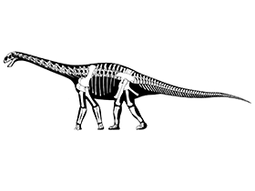 Skelettzeichnung des Cetiosaurus / © Jaime A. Headden. Creative Commons 3.0 Unported (CC BY 3.0)