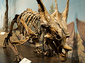 Skelett des Chasmosaurus / © Jonathan Crowe. Creative Commons 2.0 Generic (CC BY-NC-ND 2.0)
