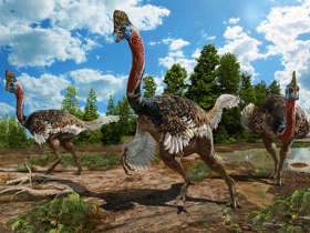 Corythoraptor / © Zhao Chuang. Creative Commons 4.0 International (CC BY 4.0)