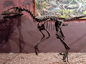 Deinonychus / © Linden Tea (Flickr.com). Creative Commons 2.0 Generic (CC BY-NC-ND 2.0)