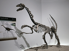 Skelett des Erliansaurus / © Kabacchi (Flickr.com). Creative Commons 2.0 Generic (CC BY 2.0)