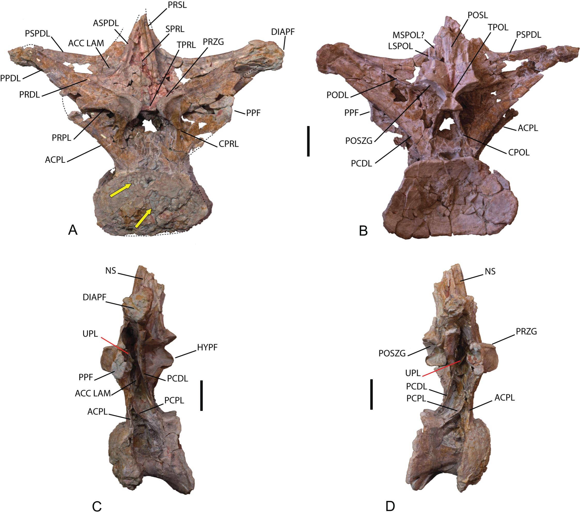 Europatitan eastwoodi - Beschreibung, Dinodata.de
