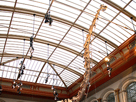 Skelett des Giraffatitan  / © Uwe Jelting. Creative Commons 4.0 International (CC BY-NC-ND 4.0)