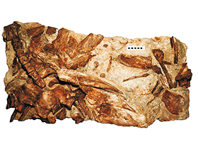 Holotyp des Hylaeosaurus / © Sachs & Hornung. Creative Commons 4.0 International (CC BY 4.0)