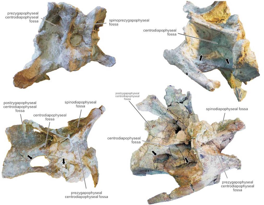 Katepensaurus goicoecheai - Beschreibung, Dinodata.de