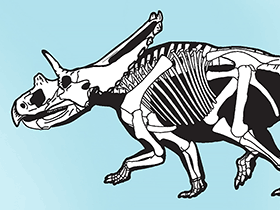 Mojoceratops / © Sampson et al. Creative Commons 4.0 International (CC BY 4.0)