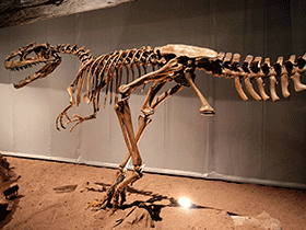 Skelett des Monolophosaurus / © Kabacchi (Flickr.com). Creative Commons 2.0 Generic (CC BY 2.0)