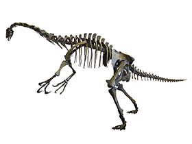 Skelett des Nothronychus / © Dinodata.de. Creative Commons 4.0 International (CC BY 4.0)