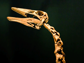 Ornithomimus / © Ricky Romero (Flickr.com). Creative Commons 2.0 Generic (CC BY 2.0)