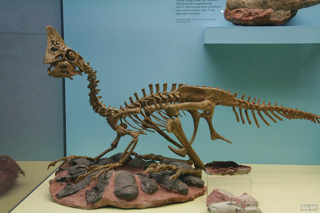 fleischfressende dinosaurier liste