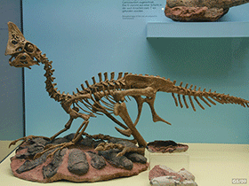 Skelett des Oviraptor / © Georg Sander (Flickr.com) . Creative Commons 2.0 Generic (CC BY-NC 2.0)