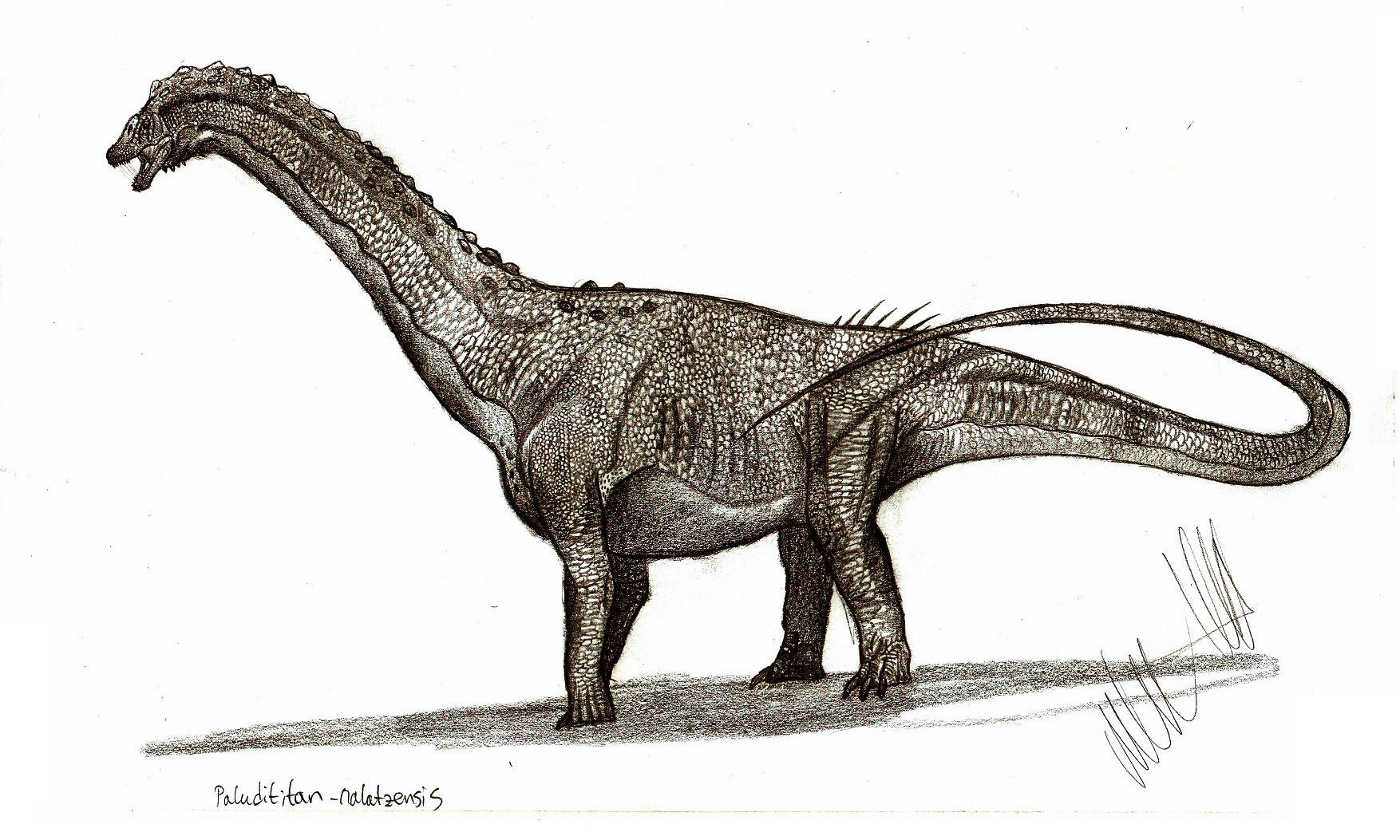 Paludititan nalatzensis - Beschreibung, Dinodata.de