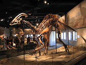 Skelett des Parasaurolophus / © Brian Smith (Flickr.com). Creative Commons 2.0 Generic (CC BY-NC-SA 2.0)