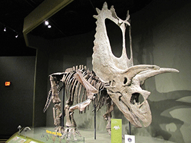 Pentaceratops / © Kurt McKee (Flickr.com). Creative Commons 2.0 Generic (CC BY-SA 2.0)