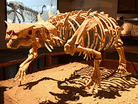 Skelett des Pinacosaurus  / © Kabacchi (Flickr.com). Creative Commons 2.0 Generic (CC BY 2.0)