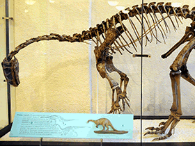 Skelett des Plateosaurus / © Vince Smith (Flickr.com). Creative Commons 2.0 Generic (CC BY-SA 2.0)