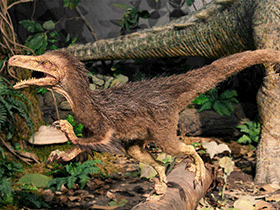 Modell des Pneumatoraptor / © Hungarian Natural History Museum. Creative Commons 3.0 Unported (CC BY-NC-ND 3.0)