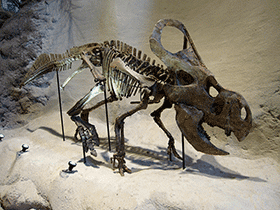 Skelett des Protoceratops./ © Miss Karen (Flickr.com). Creative Commons 2.0 Generic (CC BY 2.0)