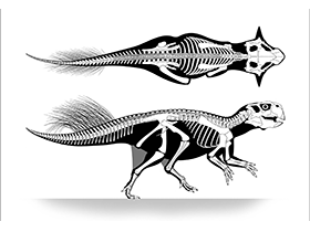 Skelettzeichnung des Psittacosaurus / © Vinther et al. Creative Commons 4.0 International (CC BY 4.0)
