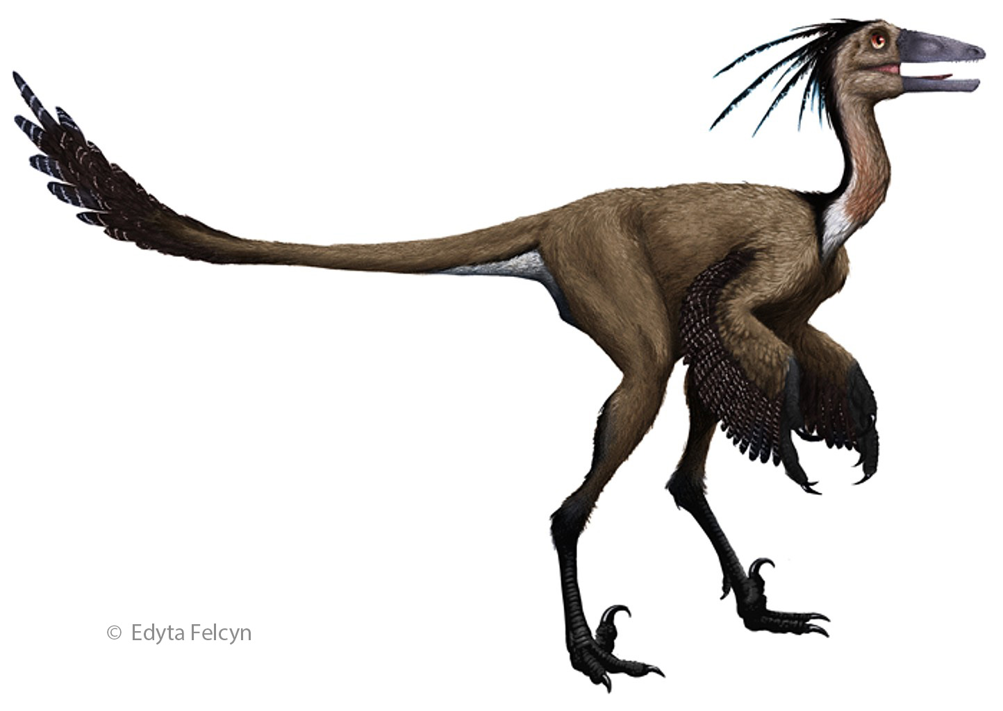 evidence suggest birds ancestors were the dinosaurs Flying reptiles ruled the skies for millions of years pterosaurs, however, were not dinosaurs and they are not the ancestors of modern birds.