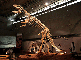Sinraptor / © Kabacchi (Flickr.com). Creative Commons 2.0 Generic (CC BY 2.0)