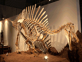 Rekonstruiertes Skelett des Spinosaurus / © Kabacchi (Flickr.com). Creative Commons 2.0 Generic (CC BY 2.0)