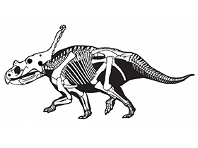 Vagaceratops / © Sampson et al. Creative Commons 4.0 International (CC BY 4.0)