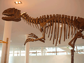 Skelett des Yangchuanosaurus  / © Crossroads (Flickr.com). Creative Commons 2.0 Generic (CC BY-NC-ND 2.0)