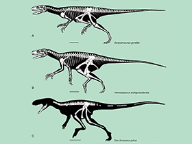 Herrerasauridae / © ZooKeys. Creative Commons 3.0 Unported (CC BY 3.0)