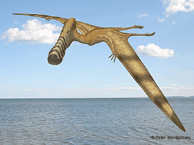 Plataleorhynchus  / © Peter Montgomery (Flickr.com). Creative Commons 2.0 Generic (CC BY-NC-SA 2.0)