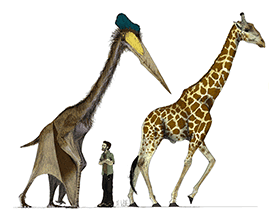 Quetzalcoatlus & Giraffe / © Mark Witton. Creative Commons 2.0 Generic (CC BY-NC-SA 2.0)