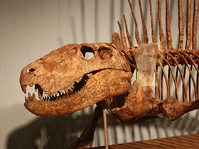 Dimetrodon / © Kordite (Flickr.com). Creative Commons 2.0 Generic (CC BY-NC 2.0)