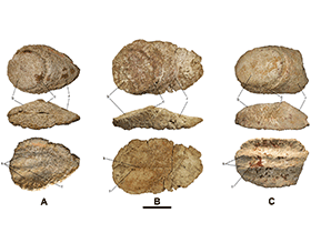 Osteodermen eines Titanosauriers aus Lo Hueco, Spanien / © Vidal et al. Creative Commons 4.0 International (CC BY-NC 4.0)